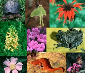 Biodiversity