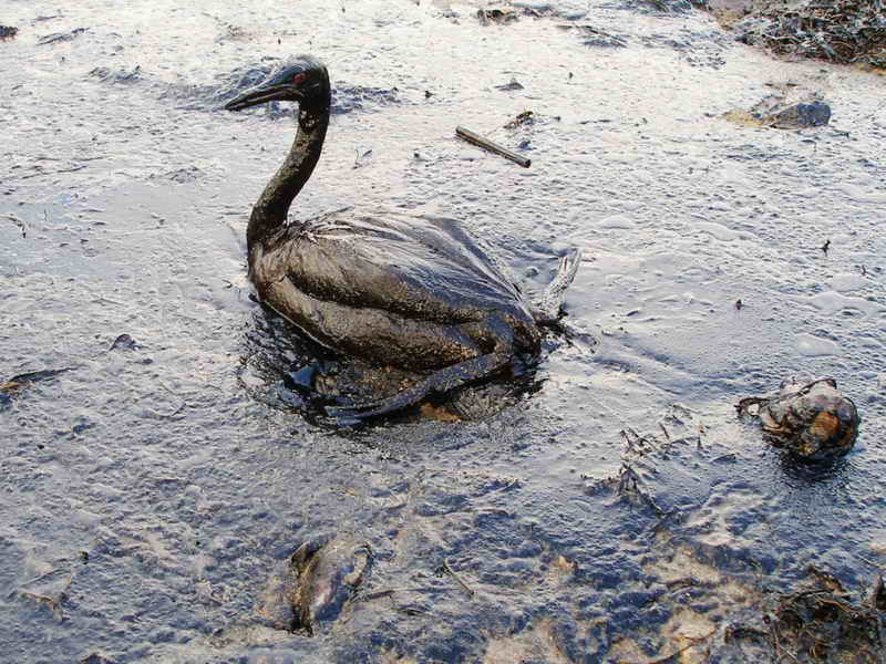 Oil Effects on Plants Effects of a Crude Oil Spill