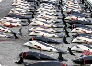 We Support the Petition to End the Faroe Islands' Whale & Dolphin Slaughter