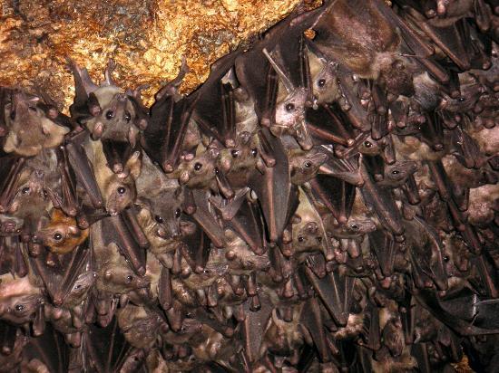 the-bat-cave