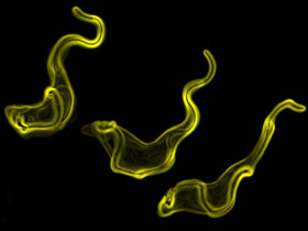 Trypanosomes