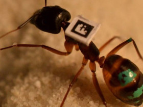 How to catalogue your ants