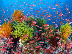 The Great Barrier Reef, © Gary Bell/Oceanwidelmages.com, via Australian Conservation Foundation website