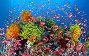 World Oceans Day – 7 June 2013, Live Event