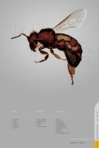 Builder Bees - photo via Gizmodo.com