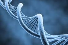 genetics pic